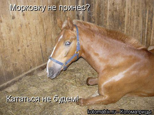 Котоматрица: Морковку не принес? Кататься не будем!