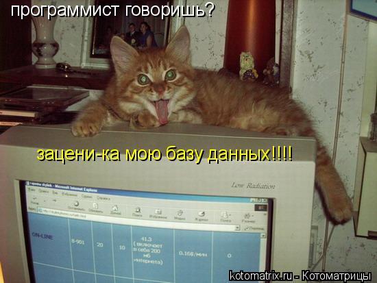 Котоматрица: программист говоришь? зацени-ка мою базу данных!!!!