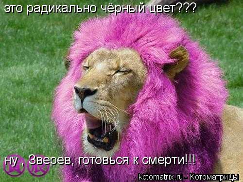 Котоматрица: это радикально чёрный цвет??? ну , Зверев, готовься к смерти!!!