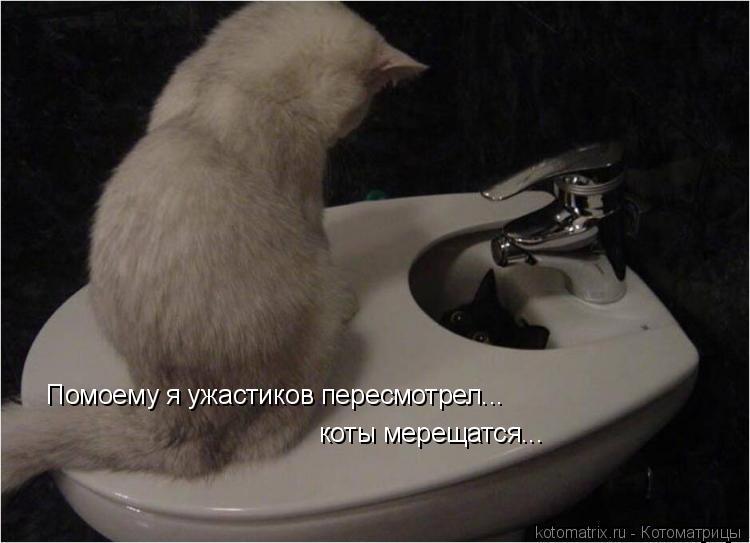 Котоматрица: Помоему я ужастиков пересмотрел... коты мерещатся...