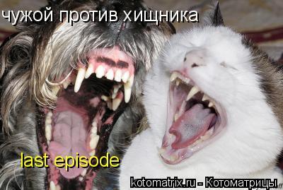 Котоматрица: чужой против хищника last episode