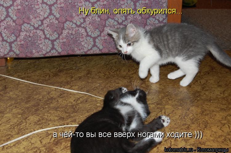 Котоматрица: Ну блин, опять обкурился... а чёй-то вы все вверх ногами ходите )))