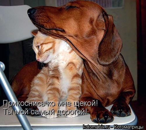 http://kotomatrix.ru/images/lolz/2008/05/21/news.txthw.jpg