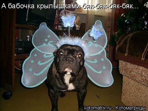 Котоматрица: А бабочка крылышками бяк-бяк-бяк-бяк...