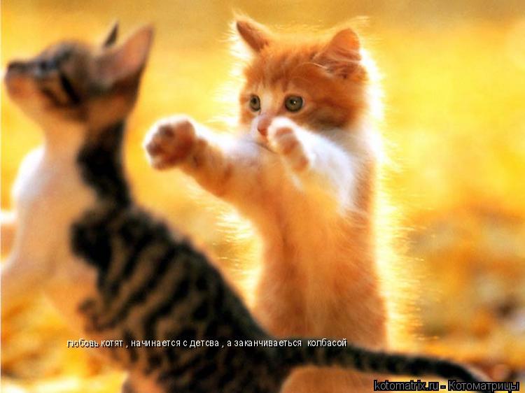 Котоматрица: любовь котят , начинается с детсва , а заканчиваеться  колбасой