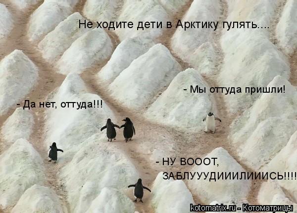 Котоматрица: Не ходите дети в Арктику гулять.... - Мы оттуда пришли! - Да нет, оттуда!!! - НУ ВОООТ,  ЗАБЛУУУДИИИЛИИИСЬ!!!!