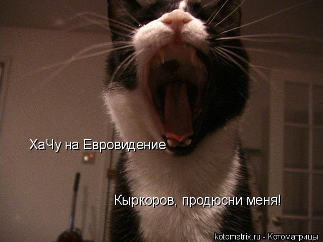 Котоматрица: ХаЧу на Евровидение Кыркоров, продюсни меня!