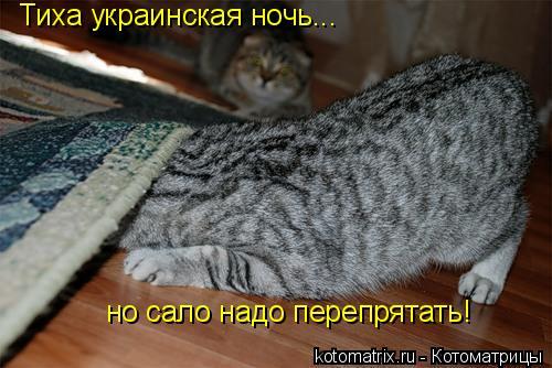 Котоматрица: Тиха украинская ночь... но сало надо перепрятать!