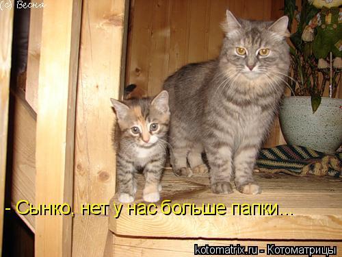 Котоматрица: - Сынко, нет у нас больше папки...