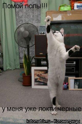 Котоматрица: Помой полы!!! у меня уже локти черные!!!