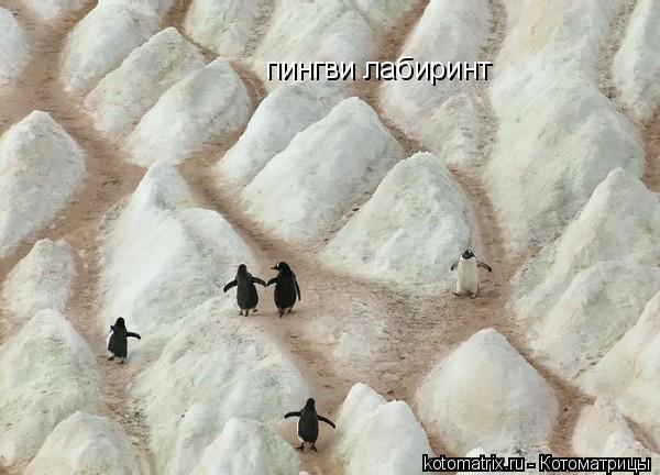 Котоматрица: пингви лабиринт