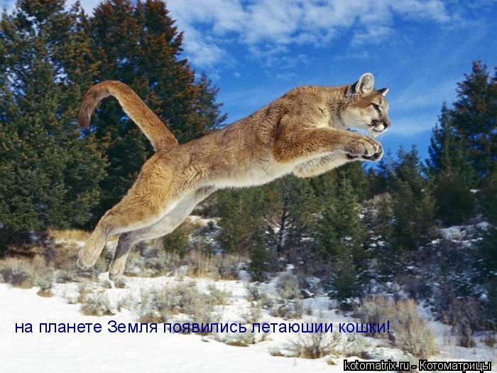 Котоматрица: на планете Земля появились летаюшии кошки!