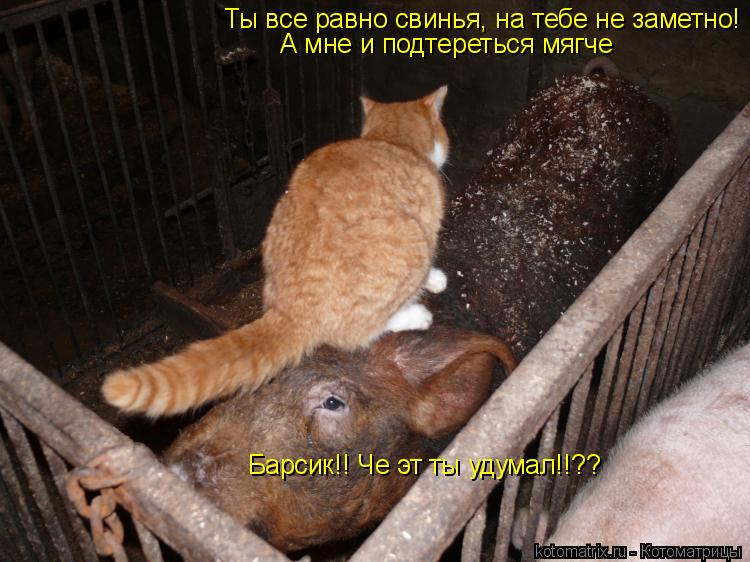 Котоматрица: Барсик!! Че эт ты удумал!!?? Ты все равно свинья, на тебе не заметно! А мне и подтереться мягче