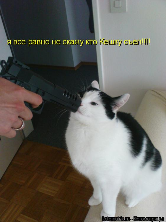 Котоматрица: я все равно не скажу кто Кешку съел!!!!