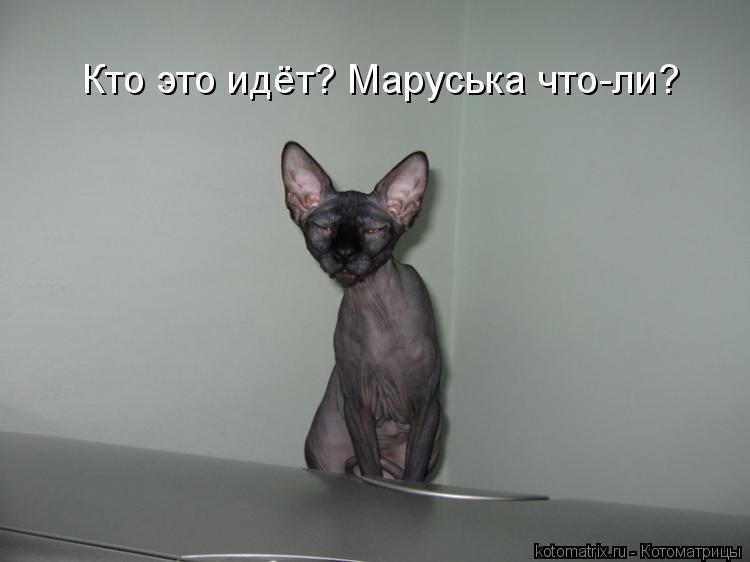 Котоматрица: Кто это идёт? Маруська что-ли?