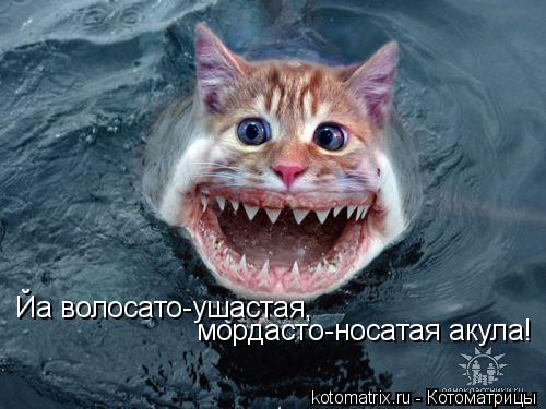 Котоматрица: Йа волосато-ушастая,  мордасто-носатая акула!