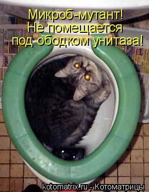 Котоматрица: Микроб-мутант!  Не помещается  под ободком унитаза!