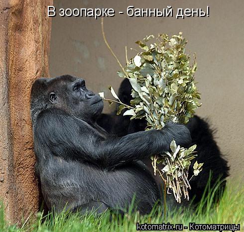 Котоматрица: В зоопарке - банный день!