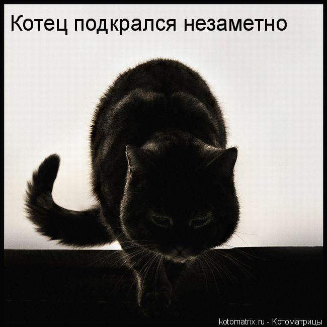 Котоматрица: Котец подкрался незаметно