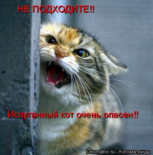 Котоматрица: НЕ ПОДХОДИТЕ!! Испуганный кот очень опасен!!