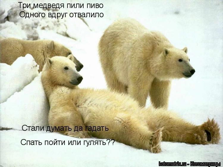 Котоматрица: Три медведя пили пиво Одного вдруг отвалило Спать пойти или гулять?? Стали думать да гадать