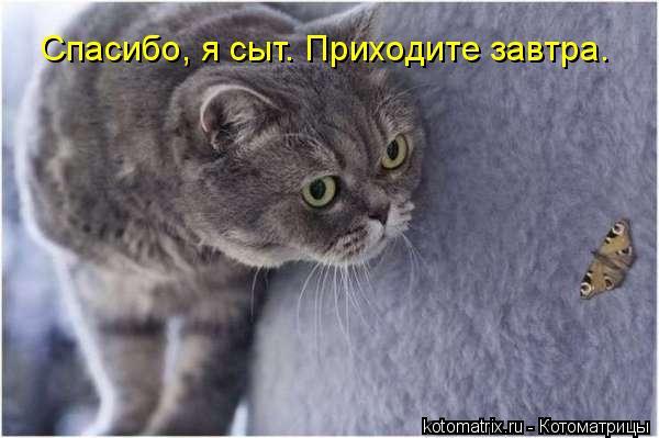 Котоматрица: Спасибо, я сыт. Приходите завтра.
