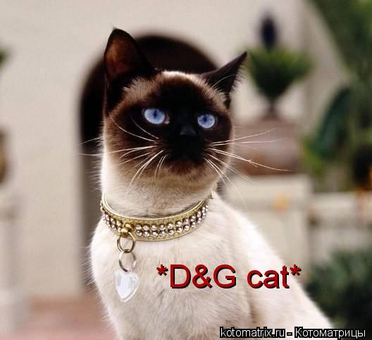 Котоматрица: *D&G cat*