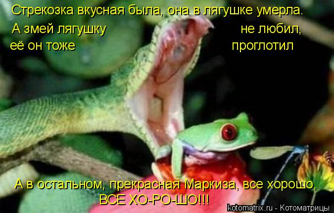 Котоматрица: Стрекозка вкусная была, она в лягушке умерла. А змей лягушку                                     не любил,  её он тоже