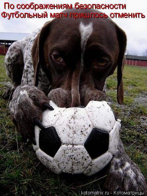 Котоматрица: По соображениям безопасности Футбольный матч пришлось отменить