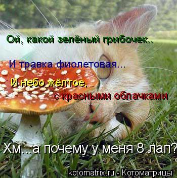 Котоматрица: Ой, какой зелёный грибочек.. И травка фиолетовая... Хм...а почему у меня 8 лап?  И небо жёлтое, .  с красными облачками