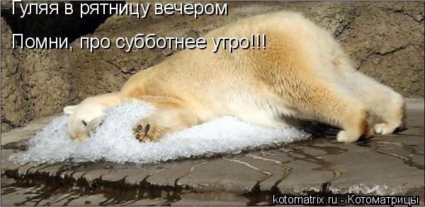 Котоматрица: Гуляя в рятницу вечером Помни, про субботнее утро!!!