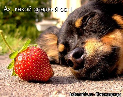 Котоматрица: Ах, какой сладкий сон!