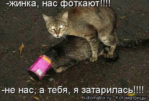 Котоматрица: -жинка, нас фоткают!!!! -не нас, а тебя, я затарилась!!!!