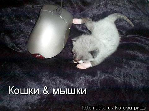 Котоматрица: Кошки & мышки