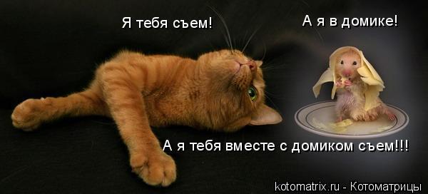 Котоматрица: Я тебя съем! А я в домике! А я тебя вместе с домиком съем!!!