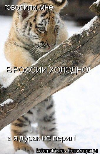 Котоматрица: говорили мне В РОССИИ ХОЛОДНО! а я дурак не верил!
