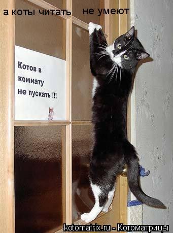Котоматрица: а коты читать  не умеют
