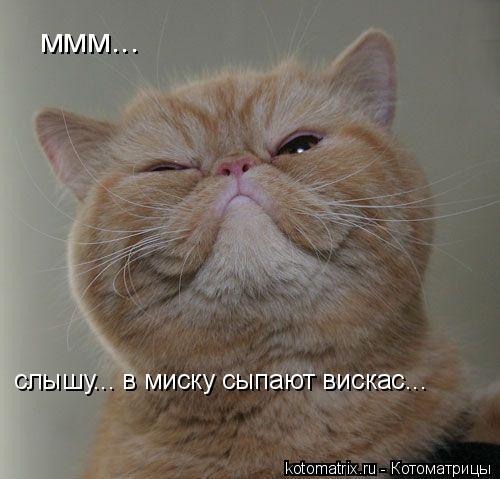Котоматрица: ммм... слышу... в миску сыпают вискас...