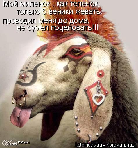 Котоматрица: Мой миленок — как теленок,  только б веники жевать:  проводил меня до дома,  не сумел поцеловать!!!