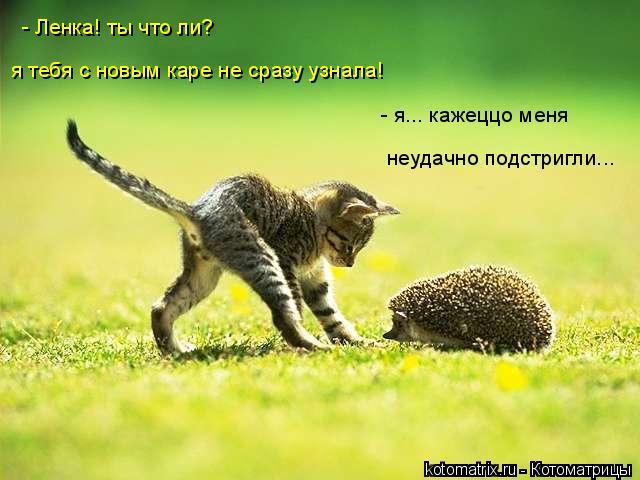 Котоматрица: - Ленка! ты что ли? я тебя с новым каре не сразу узнала! - я... кажеццо меня  неудачно подстригли...