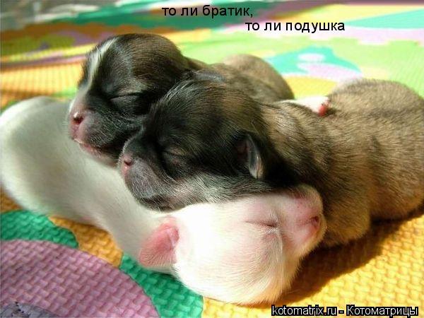 Котоматрица: то ли братик, то ли подушка