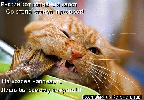 Котоматрица: Рыжий кот копчёный хвост Со стола стянул, прохвост! На хозяев наплевать - Лишь бы самому пожрать!!!