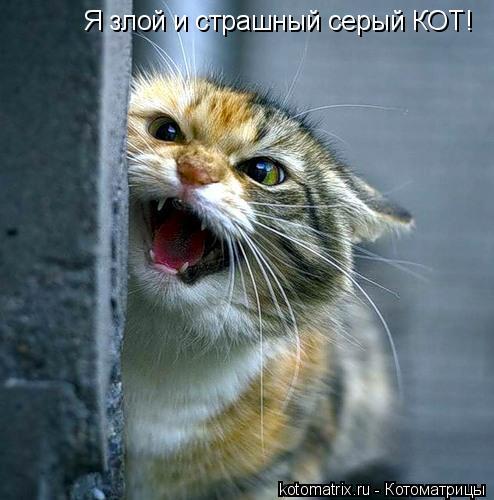 Котоматрица: Я злой и страшный серый КОТ!