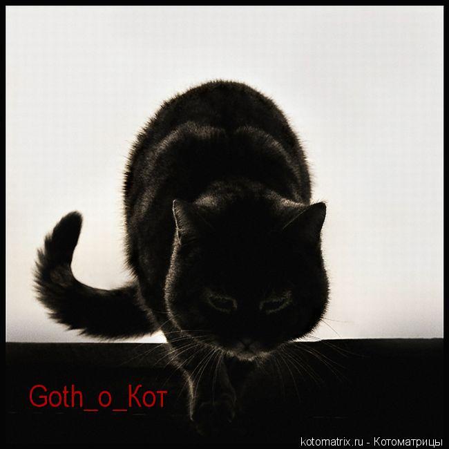 Котоматрица: Goth_o_Кот