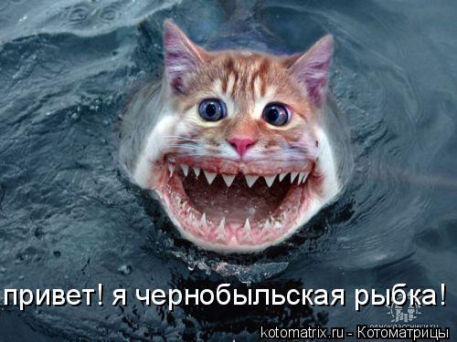 Котоматрица: привет! я чернобыльская рыбка!