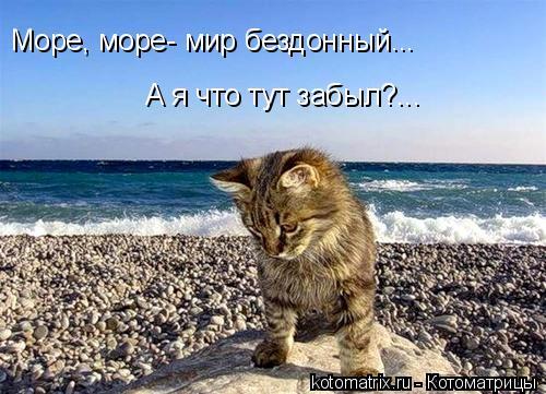Котоматрица: Море, море- мир бездонный... А я что тут забыл?...