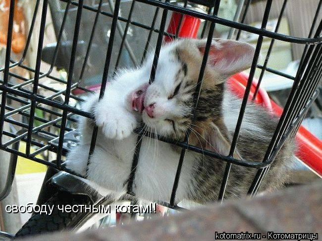 Котоматрица: свободу честным котам!!