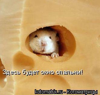 Котоматрица: Здесь будет окно спальни!