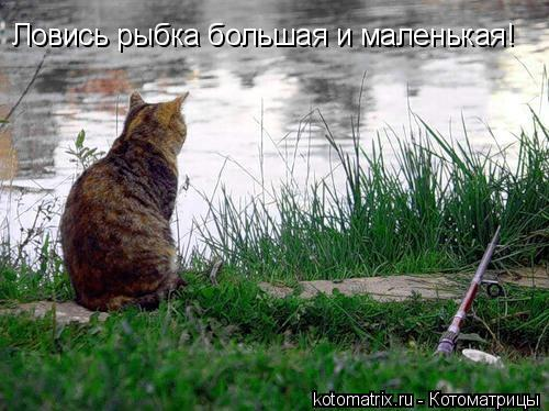 Котоматрица: Ловись рыбка большая и маленькая!
