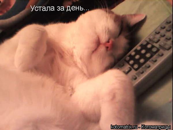 Котоматрица: Устала за день...